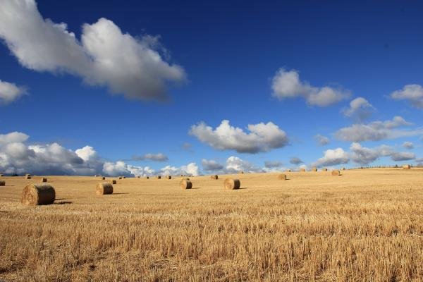 5 reasons why farmland might be investors' best bet